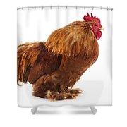 Coq Brahma Shower Curtain