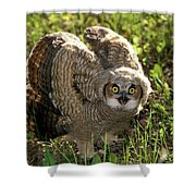 Nature And Wildlife Shower Curtain