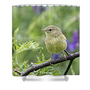 Orangecrowned Warbler Shower Curtain