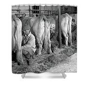 1930s 1940s Three Men Hand Milking Shower Curtain