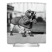1930s Cocker Spaniel Wearing Glasses Shower Curtain