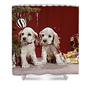 1960s Two Cocker Spaniel Puppies Shower Curtain