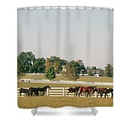 1990s Small Group Of Horses Shower Curtain