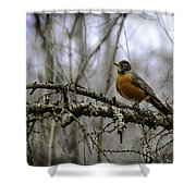 1st Robin Of Spring Shower Curtain