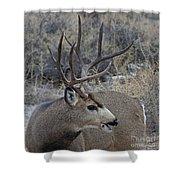 4x4 Mule Deer Buck Shower Curtain