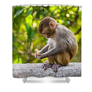 A Baby Macaque Eating An Orange Shower Curtain