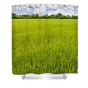 A Field Of Green Wheat Under A Cloudy Sky Shower Curtain