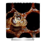 A Honeybee Hive After Colony Collapse Shower Curtain