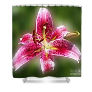 A Lilly For You Shower Curtain