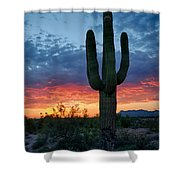 A Saguaro Sunset  Shower Curtain