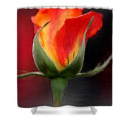 A Single Red Rose Shower Curtain