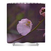 A Soft Flower Shower Curtain