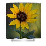 A Sunflower  Shower Curtain