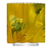 Abstract Parrot Tulip Shower Curtain