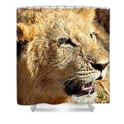 African Lion Cub Portrait Shower Curtain