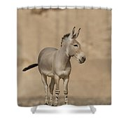 African Wild Ass Equus Africanus Shower Curtain