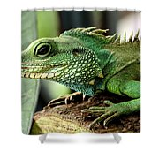 Agame Shower Curtain