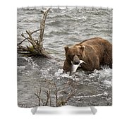 Alaskan Grizzly Shower Curtain