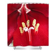 Amaryllis Named Black Pearl Shower Curtain