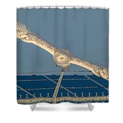 Amazing Wingspan Shower Curtain