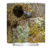 American Dipper And Nest   #1487 Shower Curtain