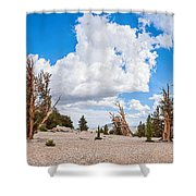 Ancient Panorama - Bristlecone Pine Forest Shower Curtain