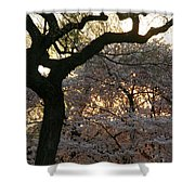 Angry Trees At Sunset Shower Curtain