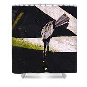 Anhinga Or Snake Bird Shower Curtain