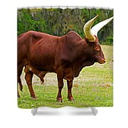 Ankole-watusi Cattle Shower Curtain