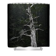 Anthropomorphic Tree Shower Curtain
