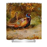 Autumn Covert Pheasants Shower Curtain