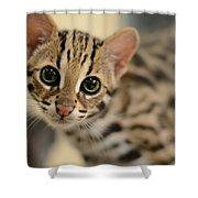 Asian Leopard Cub Shower Curtain