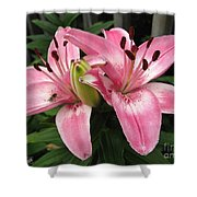 Asiatic Lily Named Vermeer Shower Curtain