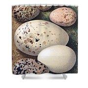 Assorted Birds Eggs, Historical Art Shower Curtain
