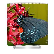 Atala Butterfly Shower Curtain