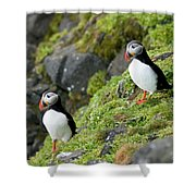 Atlantic Puffin, Fratercula Arctica Shower Curtain