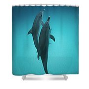 Atlantic Spotted Dolphin Pair Bahamas Shower Curtain