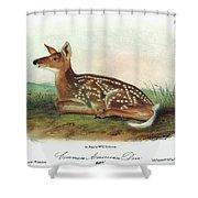 Audubon Deer Shower Curtain