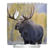 Autumn Bull Moose IIi Shower Curtain