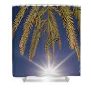 Autumn Coniferous Shower Curtain