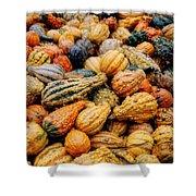 Autumn Gourds Shower Curtain by Joann Vitali