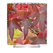 Autumnal Liquidambar Leaves Shower Curtain