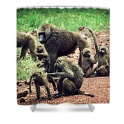 Baboons In African Bush Shower Curtain