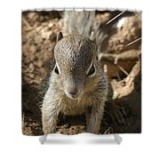 Baby Rock Squirrel Shower Curtain