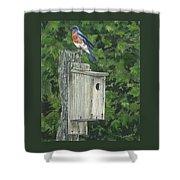 Backyard Bluebird 2 Shower Curtain