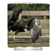 Bald Eagle In Flight Photo Shower Curtain