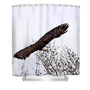 Bald Eagle Soaring Shower Curtain