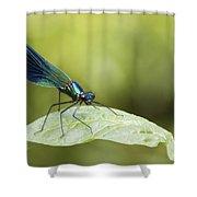 Banded Demoiselle Digital Art Shower Curtain