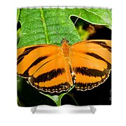 Banded Orange Butterfly Shower Curtain