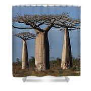 baobabs of Madagascar Shower Curtain